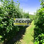 incorp-photo-41062554.jpg